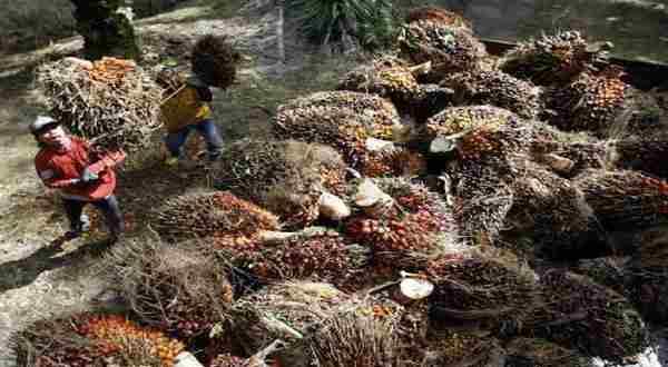BUMN Ditawarkan Investasi Kelapa Sawit di Filipina