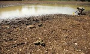 Kekeringan, 2.952 Hektare Tanaman Pangan di Sumut Rusak