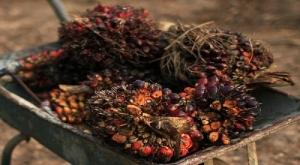 Indonesia-Malaysia Jalin Kerjasama Industri Hilir Sawit