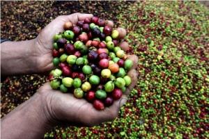 Lampung Ekspor 30 Ton Kopi Instan