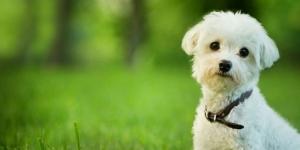 Warga AS Lebih Sedih Ditinggal Anjing ketimbang Pasangan