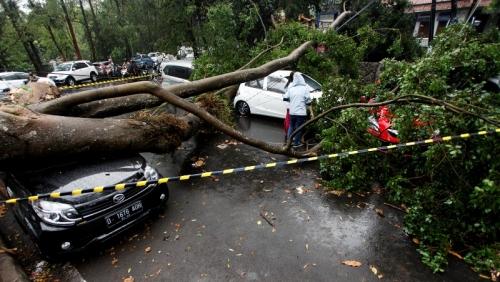 Pemkot Bandung Upayakan Ganti Rugi Mobil Tertimpa Pohon