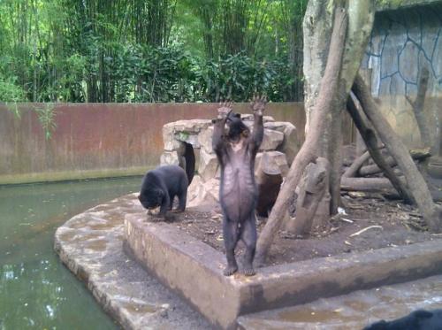 Bahas Beruang 'Kelaparan', BBKSDA Panggil Pengelola Kebun Binatang Bandung