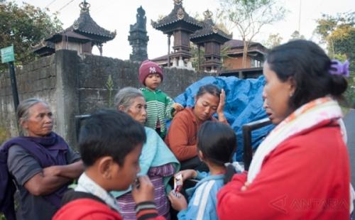 Wah, Pemda Setempat Kebingungan dengan 20 Ribu Ekor Sapi Milik Pengungsi Gunung Agung