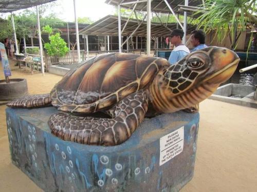 Berniat Liburan ke Pulau Penyu di Tanjung Benoa Bali? Ketahui Serba-serbinya di Sini